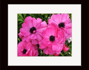5 X 7 Matted Color Photograph of Pink Ranunculus Flowers