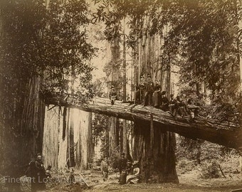 """Carleton Watkins photo, """"Picnicking in Redwood Groves"""" Russian River, 1870s"""