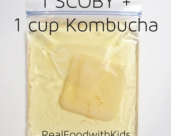 Kombucha SCOBY and 1 cup Starter