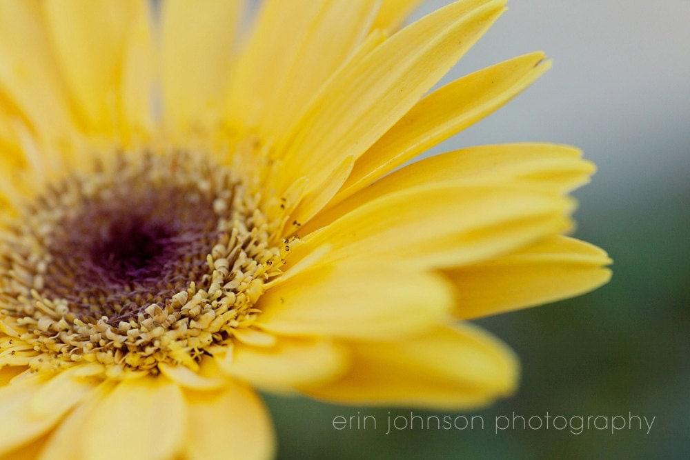 yellow flower photography gerber daisy yellow home decor