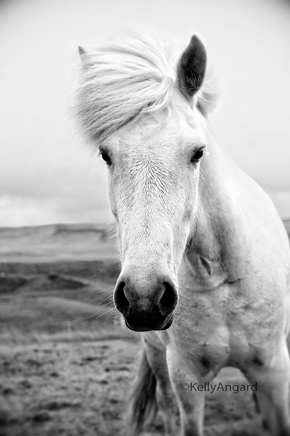 Horse Photograph, black and white horse photography, portrait, Icelandic horse landscape