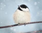 Winter Art, Winter Decor, Bird Art, Winter Artwork, Snow Photo, Nature Photography, Winter Bird Print, Chickadee in Snow No. 17