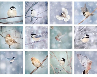 Birds in Snow Mini Portfolio, Affordable Art for Bird Lovers, Winter Decor, Animal Photo Collection, Bird Photos, 5x5 Print Set