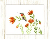 Ruby Throated Hummingbird Print -- bird art -- colorful bird art 52 birds stephanie fizer coleman illustration