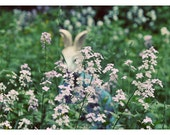 Whimsical Portrait Photography, Bunny Mask Photo, Surreal, Spring Flowers, Rabbit Mask Photograph, Home Decor, Easter, Green, White