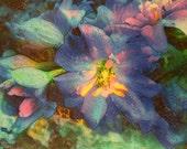 Delphiniums,in the rain, summer rain, 16x20 inches, Blue wall art, floral, nature, rain