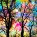 trees, 16x20, Cotton candy, Art, photography, nature, sky, trees, Woodland wedding, Nature photography, nursery decor, happy, landscape