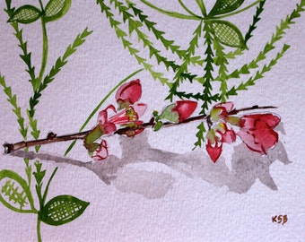 Quince Blossom on Japanese motif  - Original 5 x 7 watercolor