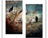 Six Raven Note Greeting Cards Photographic Art Blank Set