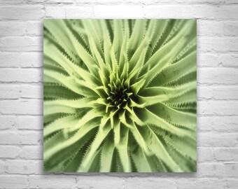 Green Agave Art, Nature Photography, Abstract Art, Southwest Art, Arizona Art, Square Art, 8 x 8, 10 x 10, 12 x 12, 16 x 16, 20 x 20