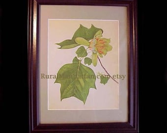 60s Botanical Plate Tulip Tree Liriodendron Tulipifera Print Flowers Leaves Leaf Frame Green Glass Branch Mat Flowering Tree Stamen Anther