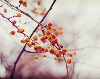 Orange Botanical Print - Nature Photography, Winter Decor, Garden Art, Soft Romantic Art, Rain Photo, Red Berries Photo, Home Decor
