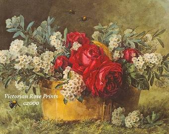 Summer Cabbage Roses, Art Print, Paul de Longpre, Vintage Art, Half Yard Long
