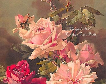 French Summer Sweeties Roses, Art Print, Half Yard Long, Catherine Klein, Shabby Chic Decor