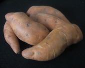 Primitive folk Art Sweet Potatoes Pattern