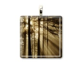 "Forest Photo Pendant ""Radiance"" Forest Pendant Tree Photo Tree Pendant Forest Jewelry Tree Jewelry Tree Necklace Forest Necklace Fog Sunrise"
