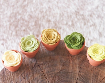 Felted Succulent Plants in terracotta pots, nature inspired eco friendly and natual home decor, CUTE
