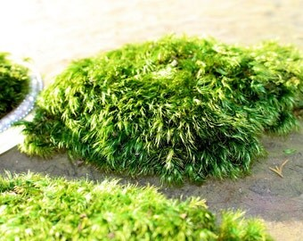 Mood Moss PREMIUM thinner Preserved  Moss-Soft Floral supplies-Wedding Supplies-Fairy Garden Moss-NO water needed