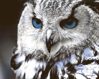 Blue Eyed Owl, Bird Art, Woodland Totem Animal, Wildlife Wilderness, Southwestern Home Decor, Wall Hanging, Giclee Print, 8 x 10