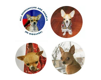 Chihuahua Magnets:  4 Sweet Chihuahuas for your home, your collection,  or to give as a unique gift