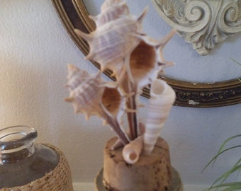 upcycled Tall Seashell and Cork Topped Cloche ~ Glass dome ~ Beach Cottage display