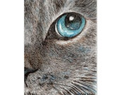cat drawing art print --eye talk of a grey cat lover gift unique card artwork(153)