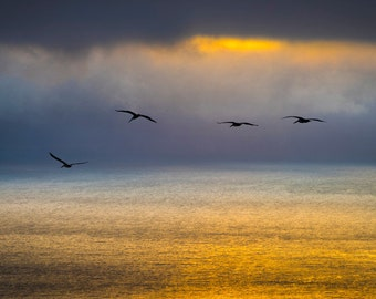 Big Sur Photography, Ocean Sunset Photo California Coast Pelicans Birds Gold Clouds Seascape Wall Art nat136