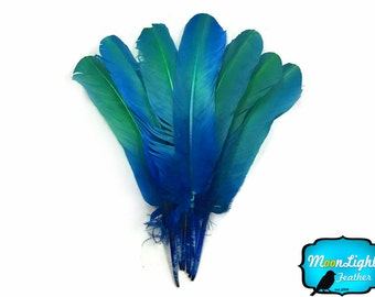 Eagle Feathers,  1/4 lb - BLUE GREEN Ombre Turkey Round Tom Wing Quill Wholesale Feathers (bulk) : 3830