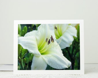 Floral Photo Card, Creamy White Daylily Flowers with Dewdrops, flower photography note card, blank notecard, stationery, a2 or a7