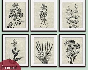 Wild Field Flowers (Series B7) Set of 6 - Art Prints (Featured in Ivory Linen) Botanical Flower Art Prints