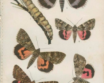 Blue Underwing, Apple Leaf Folder, Red Underwing Moth, 1926 Vintage Butterfly Print 20 Kirby, English Country, Cottage Decor