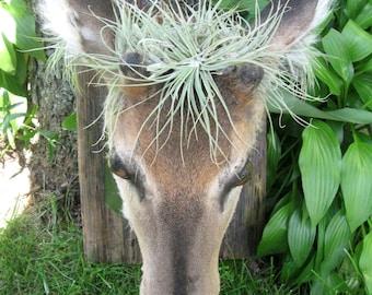 Oh Deer! Taxidermy Art Print