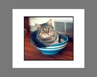 Cat Photo Card Brown Tabby Cat Photo Card in Blue and White Bowl