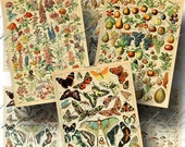 Vintage French Encyclopedia Digital Collage Sheet SALE!!! Bird, Butterfly, Floral, Mushroom, Nature Digital Download ATC #1 INSTANT Download