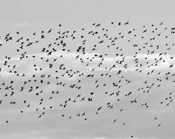 "Wildlife Photography, Nature Photography, Birds in the Wind, Sky, Flock of Birds, Black and White, Migration, ""South"", Modern Photography"