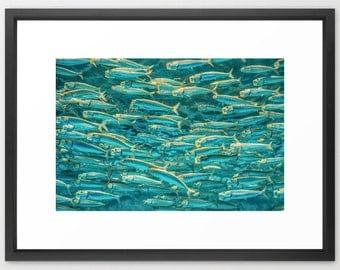 Fish School, Marine Life, Ocean, Home Decor, Print, Fine Art Photography, fPOE (6 sizes) Framed, Canvas