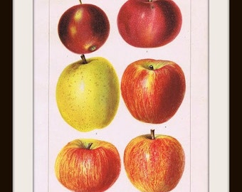 Antique Book Plate Page - APPLES