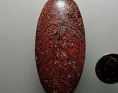 Fossil Dinosaur Bone Red Color 100% Natural Hand Cut Cabochon Stock# B1112, free U.S. shipping