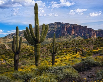 Spring time flowers with Saguaro Cactus and the Superstition Mountains in central Arizona.