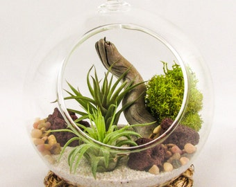 Air Plant Terrarium Kit by Midnight Blossom - Hanging Globe with Living Tillandsia Plants, Driftwood, Sand, Pebbles and moss