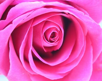 Bright Pink Magenta Rose Fine Art Photo