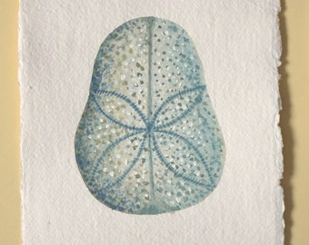 Original watercolour sand dollar urchin sea shell illustration painting ocean beach series