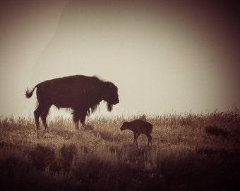 Baby Bison vintage