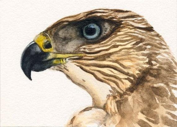 Hawk painting watercolor - photo#40