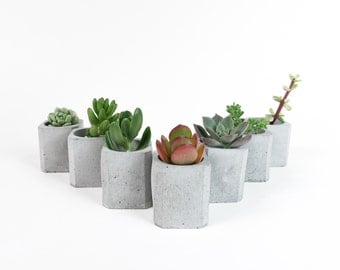 Gift Set of 7 - Beveled Square Mini Concrete Planter - Beveled Edge