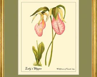 LADY'S SLIPPER - Wildflower Botanical 8x10 print reproduction