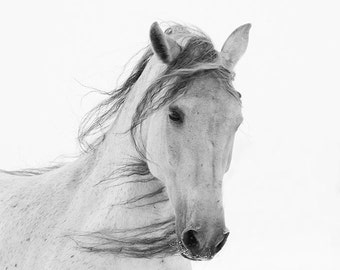 White Mare in the Snow - Fine Art Horse Photograph - Horse - Snow - Andalusian