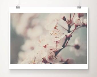 apple blossom photograph blossom tree photograph flower photograph spring photograph pastel home decor nursery wall art
