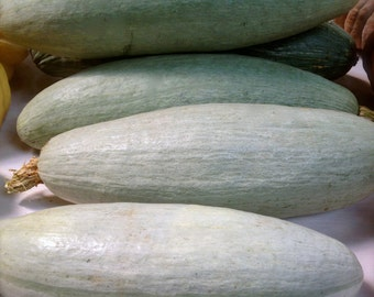 Sibley Winter Squash Guatemalan Blue Excellent Storage Capabilites Very Rare Heirloom Seeds