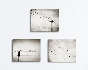 Neutral Canvas Set - birds nature photography gallery wraps bird on wire black and white grey wall art gray photo prints nursery decor